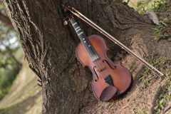 A classic violin is under tree. A violin and bow are under tree in summer season Stock Images