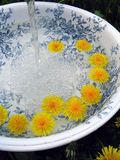 Classic wash basin and Dandelions Royalty Free Stock Photo