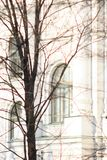 Classic white facade with historic windows. Naked tree over historic building facade in winter. High key photo Stock Photos