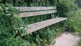 Classic Wooden Bench Royalty Free Stock Image