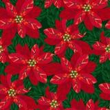 Xmas poinsettia decorative flowers seamless pattern. Classic xmas red poinsettia decorative flowers seamless pattern. Christmas floral motif for background Stock Images