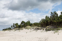 Classical Baltic beach landscape. Baltic sea coast near Liepaja, Latvia. Sand dunes with pine trees. Classical Baltic beach landscape. Wild nature Royalty Free Stock Photo