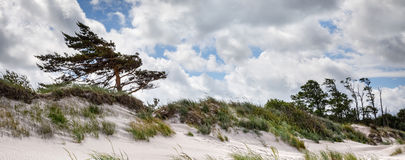 Classical Baltic sea beach landscape. Baltic sea coast near Liepaja, Latvia. Sand dunes with pine trees. Classical Baltic beach landscape. Wild nature Royalty Free Stock Image