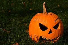 Classical carved gouged out pumpkin Hallowen Jack O Lantern lying with triangular eyes and nose on green lawn with autumn leaves,. Sunbathing in morning Stock Photography