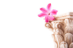 Classical column with flower Stock Photo