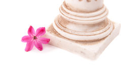 Classical column with flower Stock Image