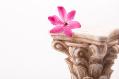Classical column with flower Royalty Free Stock Images