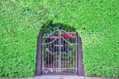 Classical design black wrought iron gate in a beautiful green ga Stock Photography