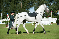 Classical dressage of Lipizzan stallion Stock Images