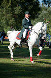 Classical dressage of Lipizzan stallion Royalty Free Stock Photos