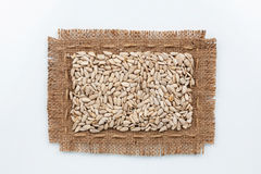 Classical frame made of burlap with seeds of sunflower Stock Images