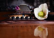 Classical guitar string and flowers royalty free stock photos
