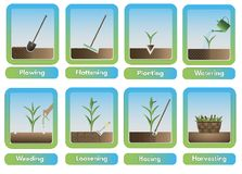 Colored farming icons Royalty Free Stock Image