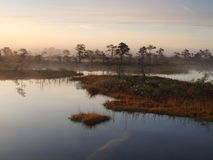 Classical Marsh Landscape, Early Morning Royalty Free Stock Photos