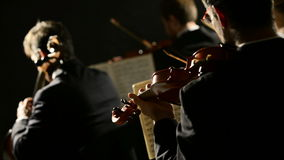 Classical Music Concert. Violinists and cellist playing at the concert, rear view stock video