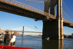 Classical NY. Seagulls beside Brooklyn bridge, view from Manhattan Royalty Free Stock Photo