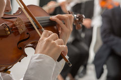 Classical orchestra string section performing royalty free stock image