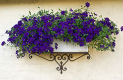 Classical planter flowerpot on a bricks wall Royalty Free Stock Photography