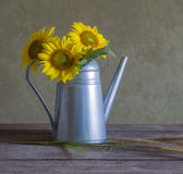 Classical still life with beautiful sunflowers bouquet Royalty Free Stock Photo