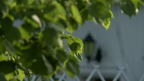 Streetlight on a house changing focus video. Classical style streetlight fixed on a house changing focus video stock footage