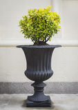 Classical Urn with Round Topiary. A dark gray reproduction classical urn with a globe shaped topiary planting royalty free stock photography
