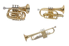 Classical wind musical instrument cornet isolated on white background Stock Image
