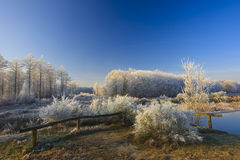 A classical winter landscape on a beautifull day Stock Photos