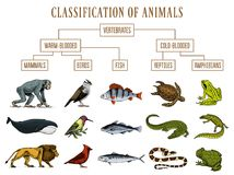 Classificação dos animais Pássaros dos mamíferos dos anfíbios dos répteis Peixes Lion Whale Snake Frog do crocodilo Diagrama da e ilustração do vetor