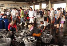 Classificando o calamar fresco em cestas Foto de Stock