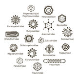 Classification of viruses. Stock Photography
