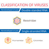 Classification of viruses. Royalty Free Stock Image