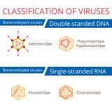 Classification of viruses. Nonenveloped viruses. Vector biology icons, medical virus icons Stock Image