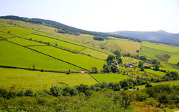 Classis Green English Countryside Stock Photography