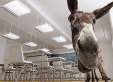 Classroom donkey Stock Images