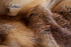 Classy and luxurious red fox fur. Classy and luxurious red fox fur Royalty Free Stock Photo