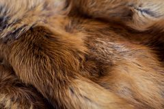 Classy and luxurious red fox fur. Classy and luxurious red fox fur Stock Photo