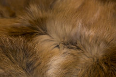 Classy and luxurious red fox fur. Stock Photography