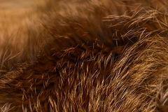 Classy and luxurious red fox fur, Stock Photos