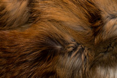 Classy and luxurious red fox fur. Royalty Free Stock Photos