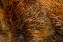 Classy and luxurious red fox fur. Stock Photo