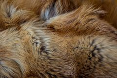 Classy and luxurious red fox fur. Classy and luxurious red fox fur Royalty Free Stock Photography
