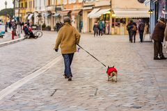 Classy mature lady walking with dog. In Italian sea village royalty free stock photo
