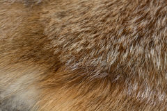 Classy red fox fur Royalty Free Stock Photography