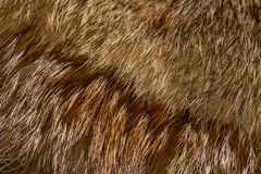 Classy red fox fur Royalty Free Stock Photos
