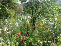 Claude Monet Garden. Monet rented and eventually purchased a house and gardens in Giverny. At the beginning of May 1883, Monet and his large family rented the Royalty Free Stock Image