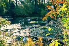 Claude Monet ogród w jesieni, wodne leluje w jeziorze na słonecznym dniu Obrazy Stock