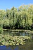 Claude Monet`s garden Stock Images