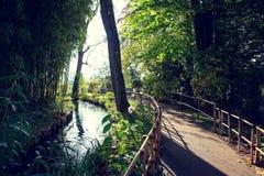 Claude Monet ` s ogród w jesieni zatoczce i ścieżce z bambusowymi drzewami na słonecznym dniu, Zdjęcie Royalty Free