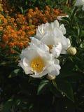 Claude Monets ogród Zdjęcia Royalty Free