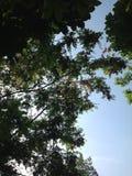 Claude Monets trädgård Royaltyfria Bilder